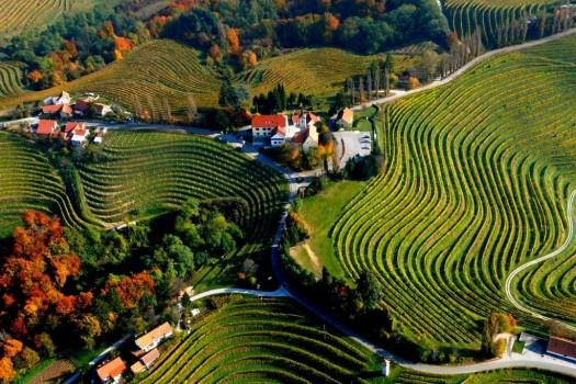 Терпкий вкус Словении