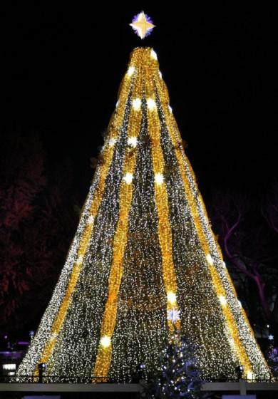 Национальная рождественская елка. Чтобы попасть на праздник, она проделала путь от Аляски, преодолев почти 7 тысяч километров.