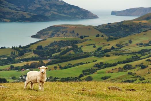 Киви, банджи и уроки английского в Новой Зеландии