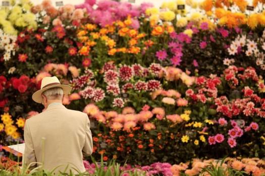 Ярмарка цветов