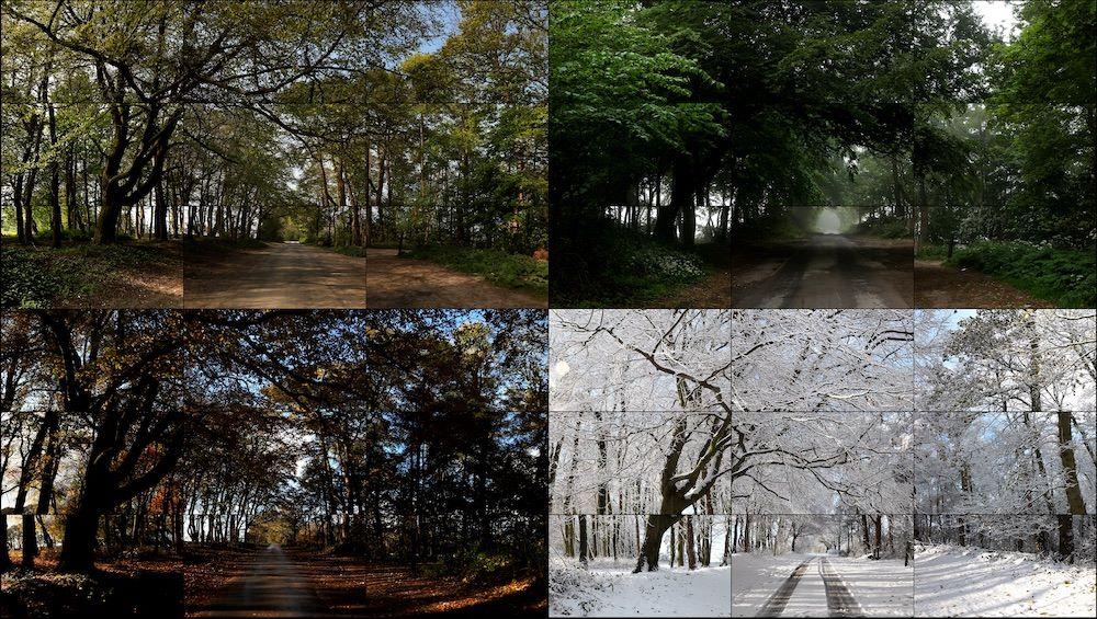 Дэвид Хокни, «Четыре сезона», Лес Волдгейта (Весна 2011, Лето 2010, Осень 2010, Зима 2010) 2010–11, 36 дигитальных видео синхронизированы и представлены на 36 мониторах © David Hockney