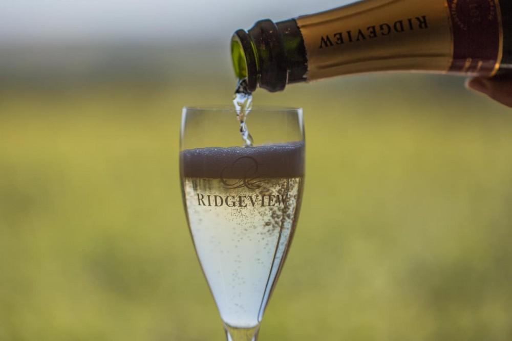 Ridgeview-vineyard-15