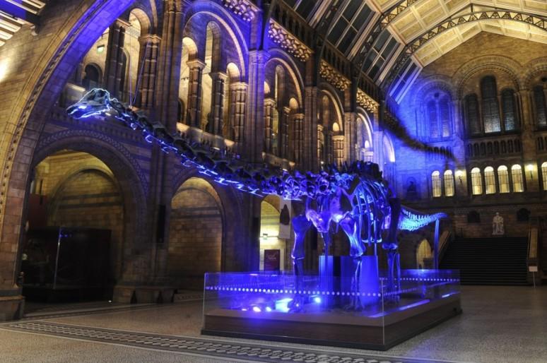 Что приготовила ночь музеев
