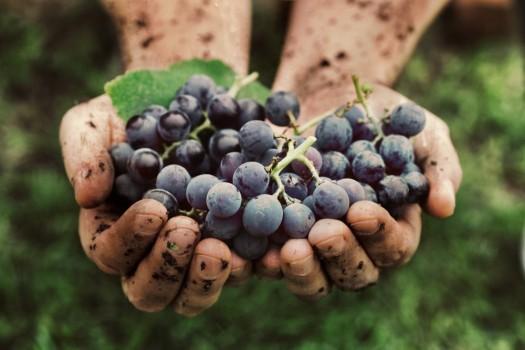 Натуральные вина: возвращение к природе