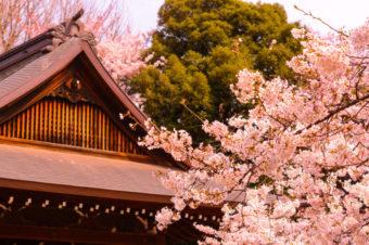 Цветение сакуры, туры и фестивали: интересные события весны