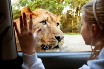 8 лучших сафари-парков Британии